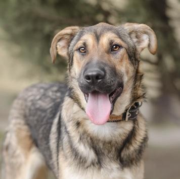 Маффин - Собаки в добрые руки