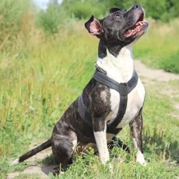 Заюша - Собаки в добрые руки