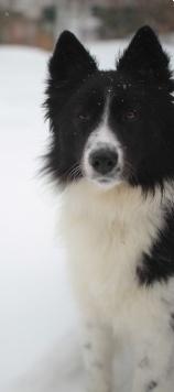 Николь - Собаки в добрые руки