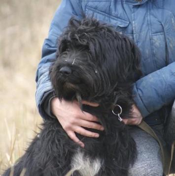 Ириска - Собаки в добрые руки