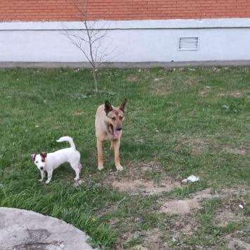 Рыжик - Найденные собаки