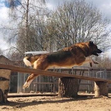 Ларс - Собаки в добрые руки
