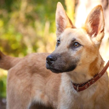 Лили - Собаки в добрые руки