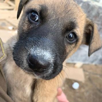 Дворяне - Собаки в добрые руки