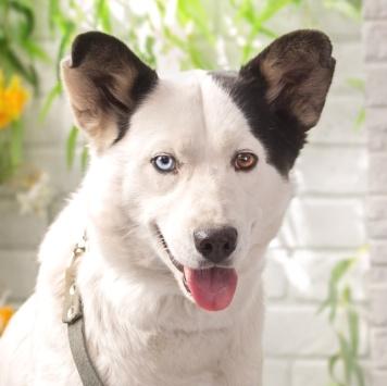 Джульба - Собаки в добрые руки