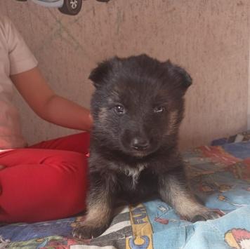 Верочка-очаровашка - Собаки в добрые руки