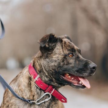 Рени - Собаки в добрые руки