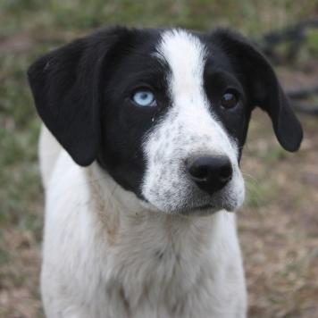Лойд - Собаки в добрые руки