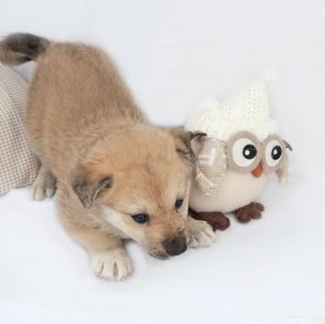 Тоня - Собаки в добрые руки