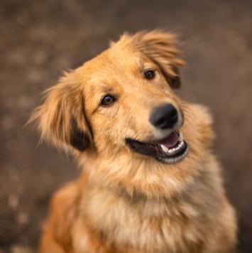Оникс - Собаки в добрые руки