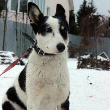 Иветта - Собаки в добрые руки