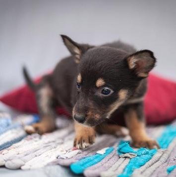 Л'уна - Собаки в добрые руки