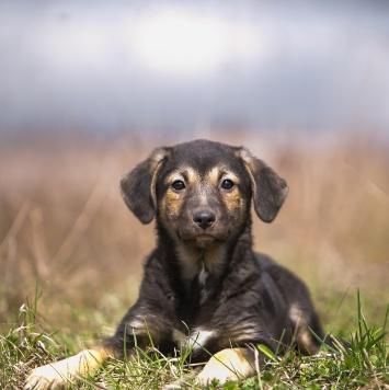Бонита - Собаки в добрые руки