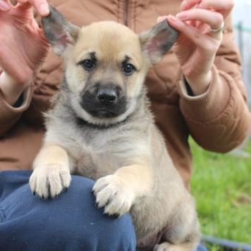 Помёт щенков - Собаки в добрые руки
