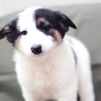 Скарлет - Собаки в добрые руки