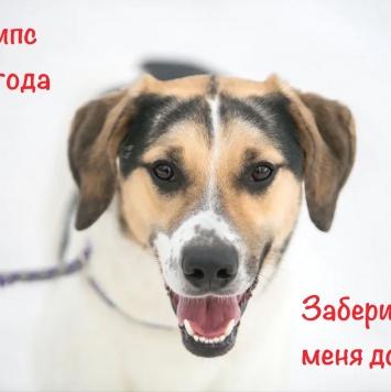 Чипс - Собаки в добрые руки
