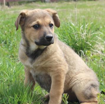 Рика - Собаки в добрые руки