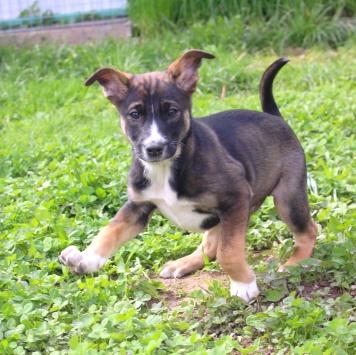 Красавчик - Собаки в добрые руки