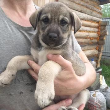 малышки - Собаки в добрые руки