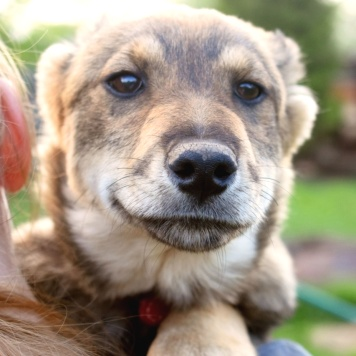 Айви - Собаки в добрые руки