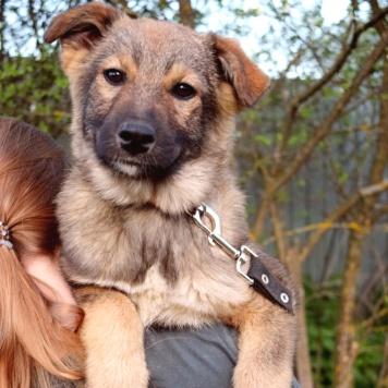 Джина - Собаки в добрые руки