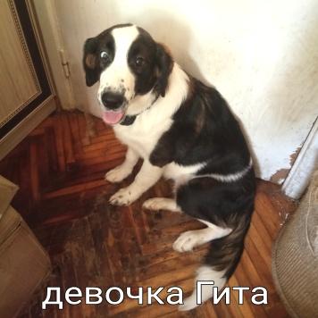 Несколько имён - Собаки в добрые руки