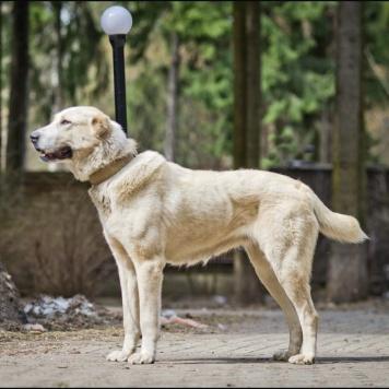 Прадо - Собаки в добрые руки