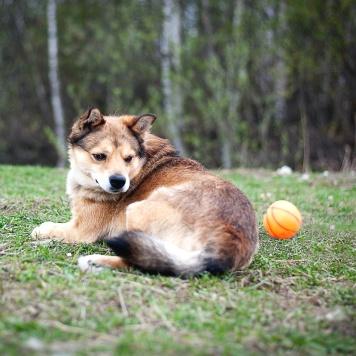 Лёва - Собаки в добрые руки