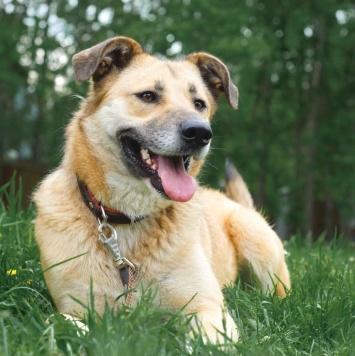 Зинка - Собаки в добрые руки