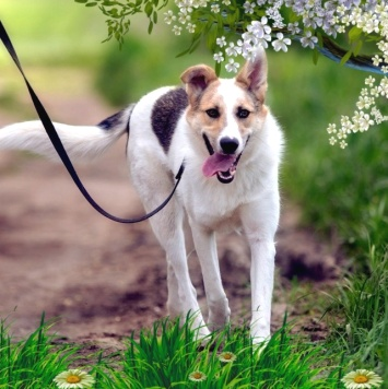 Тася - Собаки в добрые руки