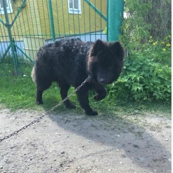 Брюс - Найденные собаки