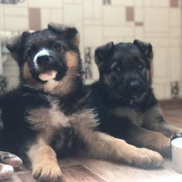 Рэкс - Собаки в добрые руки