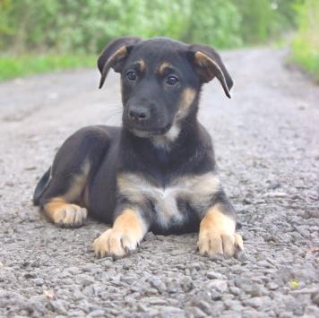 Ляпа - Собаки в добрые руки
