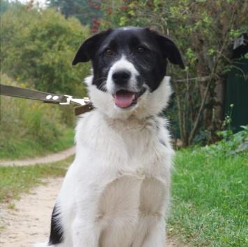 Пятнышко - Собаки в добрые руки
