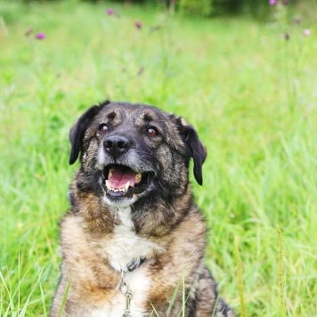 Карамелька - Собаки в добрые руки