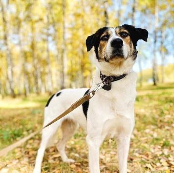 Бритни-красотка - Собаки в добрые руки