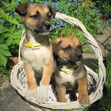 Кнопаи Злата - Собаки в добрые руки