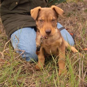 Вафелька - Собаки в добрые руки