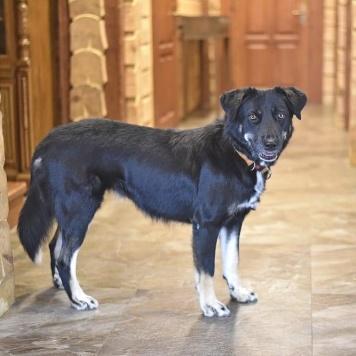 Ханна - Собаки в добрые руки