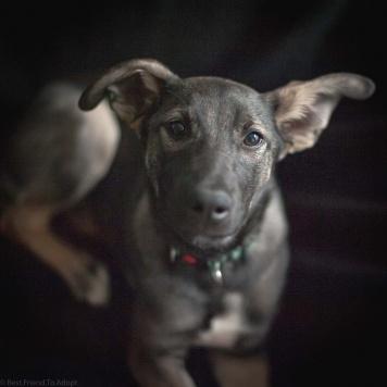 Ида - Собаки в добрые руки