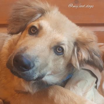 Гаврюша и Герда - Собаки в добрые руки