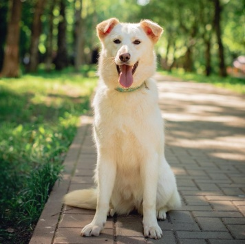 Бимба - Собаки в добрые руки