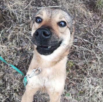 Фенечка - Собаки в добрые руки