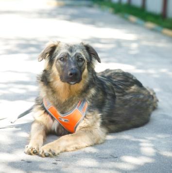 Маша - Собаки в добрые руки