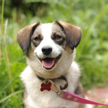 Варечка - Собаки в добрые руки