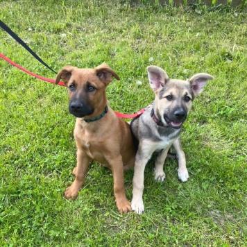 Арчибальд и Мерседес - Собаки в добрые руки