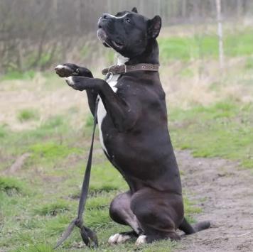Юкка - Собаки в добрые руки