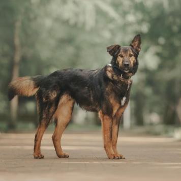 Монти - Собаки в добрые руки