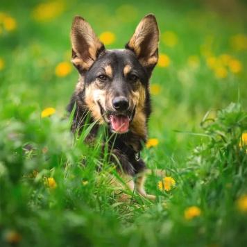 Флеш - Собаки в добрые руки