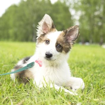 Ройс - Собаки в добрые руки